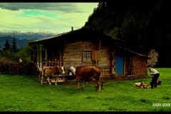 Cevizli Köyü Kışlalar2