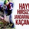 Şavşat'ta Küçükbaş Hayvan Hırsızları Jandarmanın Takibinden Kaçamadı