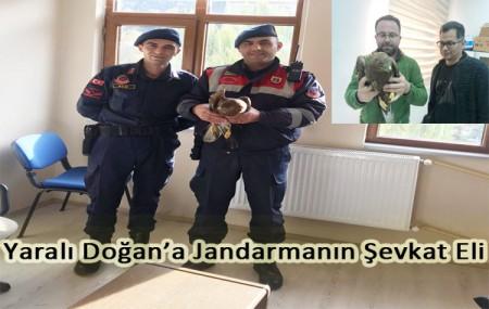 Yaralı Doğan'a Jandarmanın Şevkat Eli