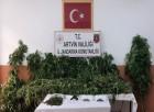 Artvin'de Jandarmadan Uyuşturucu Operasyonu:  32 Kilo Kubar Esrar Ele Geçirildi