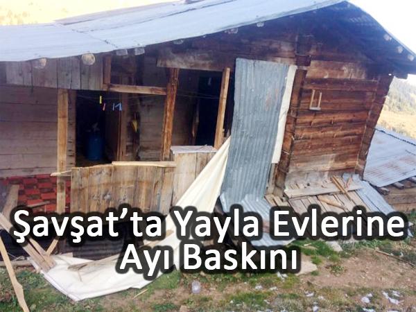Şavşat'ta Yayla Evlerine Ayı Baskını